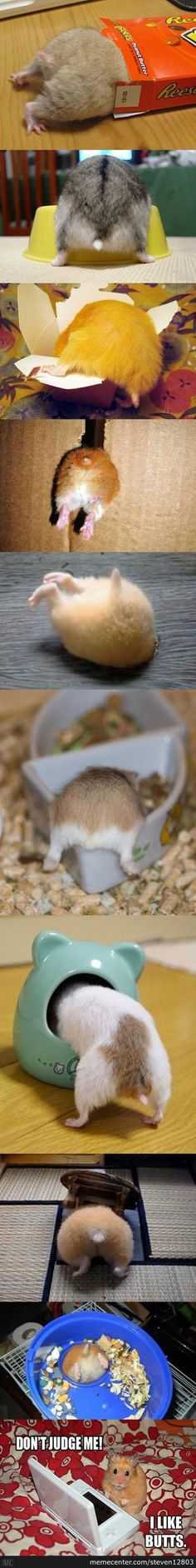 A common site for any hamsters owner.