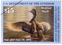 2000 Federal Duck Stamp. Oil painting of a single Mottled Duck stretching in dramatic golden sunlight by Adam Grimm.