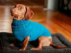Image result for dog clothing