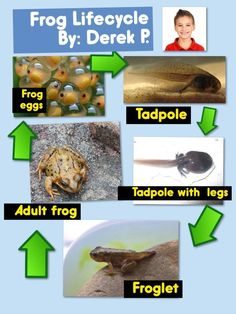 Frog Life Cycle Mini Poster with Pic Collage App