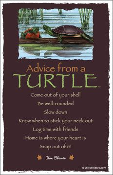 Advice from a Turtle  Come out of your shell Be well-rounded  Slow down  Know when to stick your neck out Log time with friends  Home is where your heart is  Snap out of it!