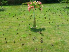 El ocaso de la golondrina: http://www.guiarte.com/noticias/el-ocaso-de-la-golondrina.html