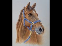 How to Paint a Horse in Watercolor Learn to paint this realistic horse in watercolor! Watch the full video tutorial, in real time at my online school: rebeccarhodes. Watercolor Painting Techniques, Watercolour Tutorials, Painting Videos, Painting Lessons, Watercolor Paintings, Watercolor Painting Tutorials, Pastel Paintings, Watercolor Horse, Watercolor Video