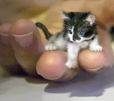 Little tiny kitten <3                                                                                                                                                      Más