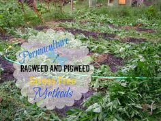 TSG: Permaculture Methods For Ragweed And Pigweed