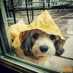 The Cutest Pets on Twitter This Week! - RAIN ON ME - Twitter Pics : People.com
