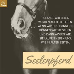 Pferdesprüche & - New Ideas Equestrian Quotes, Equestrian Outfits, Riding Quotes, All About Horses, Horse Quotes, Horse Love, More Than Words, Horse Riding, Horseback Riding