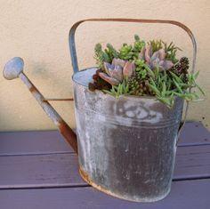 Succulents in Watering Can. LaurasLittleGardens.com