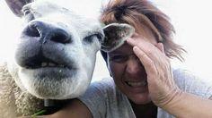 Gekke bekken trekken met mijn favoriete schaap Ugly by JoJo de Ruijter