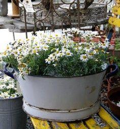 Planter filled with my favorite flower, from blog: Frøken Anker - Vintage & Nostalgi
