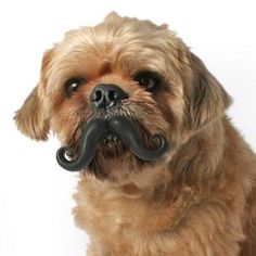 Mini Humunga Stache Dog Toy