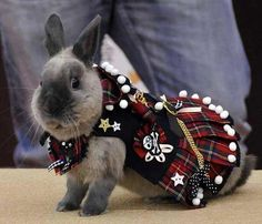 Q: What do you call a bunny in a kilt?  A: Hopscotch.