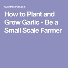 How to Plant and Grow Garlic - Be a Small Scale Farmer