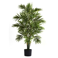 """3ft Areca Palm Tree - Big things can come in small packages. Like this stunning little Areca Palm Tree. Yes, it only stands 3' tall, but boy, does it pack a punch into those 36"""". With multiple trunks and more than 500 distinct leaves, this Areca Palm Tree says """"welcome to the sunshine"""" in a big, big way, and is perfect for smaller offices and home decorating spaces. Number of Trunks: 9 Number of Flowers: NA Number of Leaves: 513 Pot Size: H: 5 In. W: 5.75 In. D: 5.75 In. Color: NA Product…"""