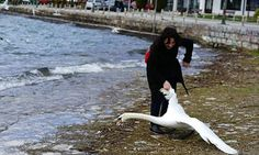 Woman Roughly Drags Swan Out Of Water By The Wing For Selfie There are mixed reports as to whether the bird survived.