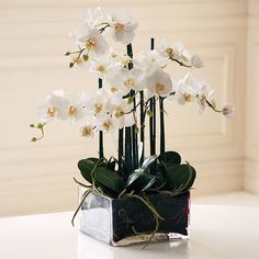 Phalaenopsis Orchid In Square Glass. Free shipping. Return within 90 days. Too tall