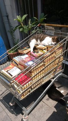 Bibliophilic cat enjoying summer wheather in Istanbul