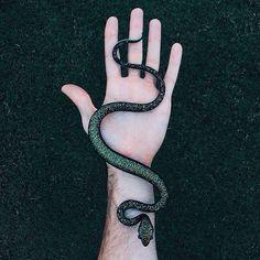 Snake life 🐍 • • • #flameworking#snake#handmade#realistic#sculpture#artglass#decor#dichroicglass#madeinusa#sneakysnake#glassofig#seasidefl#30a#sowal#southwalton#artoftheday