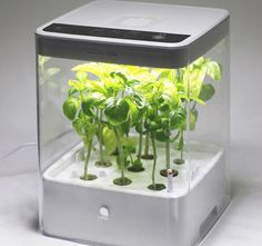 Have readymade fresh #herbs and greenery at home by cultivating them on the Cube #Hydroponic Grow Box by U-ING.