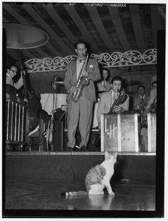 Cat enjoying jazz music in New York City, circa 1946.