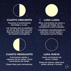 la vida es un cuenquito de instantes.: Las fases lunares