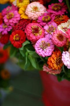 Nothing punches the vibrancy of summer's colors and fun like zinnias.