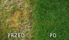trawnik przed i po zastosowanej metodzie Animal Doctor, Actions Speak Louder, Big Tree, Green Garden, Garden Paths, Outdoor Gardens, Flower Power, Life Hacks, Home And Garden