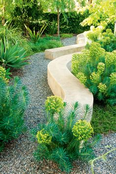 Cool Wall Drought tolerant garden - curved stone walls with plantings of euphorbia along the gravel path