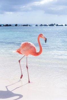 Summer   Flamingo   Pink   Sea   Paradise   More on Fashionchick.nl