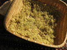 flori de soc pulbere Natural Health Remedies, Arsenal, How To Dry Basil, Herbs, Nature, Diet, Naturaleza, Herb, Nature Illustration