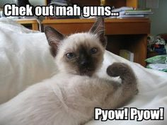Browse all of the Funny Animals With Captions photos, GIFs and videos. Find just what you're looking for on Photobucket