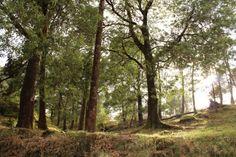 """Monte Aloia"" Natural Park. Tui, Galicia, Spain"