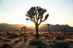 Joshua Tree National Park : Dormir dans le désert:  http://fewmilesaway.com/joshua-tree-national-park-dormir-dans-le-desert/