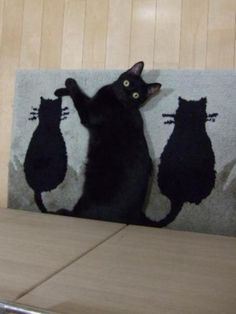 cat mat....picture taking timing perfect! Haha. The live cat on the mat and also black at that.