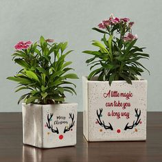Gift these Merry Christmas planters as a memento to add a spark of magic and Christmasy vibes to their yuletide spirit. Made in ceramic these planters can be personalized with desired messages or quotes. Christmas Themes, Christmas 2019, Christmas Holidays, Merry Christmas, Christmas Gifts, Personalized Buttons, Personalized Gifts, Christmas Planters, Christmas Is Coming