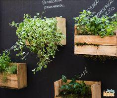 Uma ideia criativa para colocar em prática é usar um adesivo de lousa ou uma tinta que permita identificar as espécies na parede.
