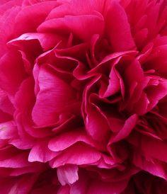 Fleur / Flower by PhotosCrystalJones on DeviantArt