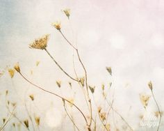Nature Photography, Seaside Flora, Flower Photography, Summer Photography, Golden, Blue, Wall Decor, Cottage Decor - Dry Flora