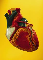 Heart Disease |Reversing heart disease without surgery and more effectively than drugs!-- Dr Fuhrman.com