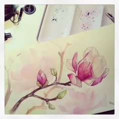 auroreblackcat: Magnolia wip!I usually paint the background first. But here I wanted a white bg and changed my mind during the process. D:…*I paint my watercolors flowers on a moleskin notebook*