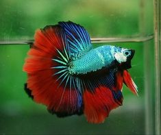 The amazing technicolor dream fish. Seriously, is there a color these beautiful creatures DON