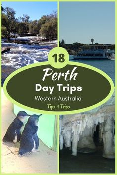 Discover 18 family friendly day trips from Perth for a one day road trip to see waterfalls, national parks, animals, and historic sites. #perthwesternaustralia #westernaustralia #traveltips4trip