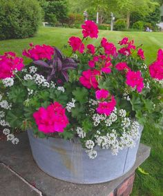 Bucket Gardening Tips geranium,persian shield,alyssum Container Flowers, Flower Planters, Garden Planters, Geranium Planters, Full Sun Container Plants, Potted Geraniums, Planter Pots, Potted Plants, Wood Barrel Planters