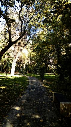 Path. Follow the light. Bucharest. Nature.
