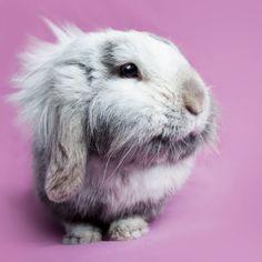 Pink bunny rabbit by Mijanou Haverkamp on 500px