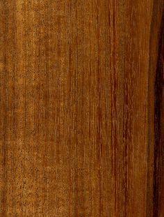 Tzalam / Caribbean Walnut / False Tamirind