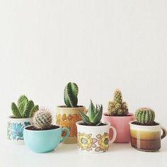 coffee mugs. Cactus in coffee mugs., Cactus in coffee mugs.,in coffee mugs. Cactus in coffee mugs., Cactus in coffee mugs. Suculentas Diy, Cactus E Suculentas, Cacti And Succulents, Planting Succulents, Planting Flowers, Succulent Ideas, Succulent Bouquet, Succulent Planters, Decoration Cactus
