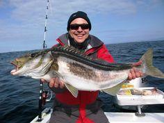 Trumpeter fish - Tasmania
