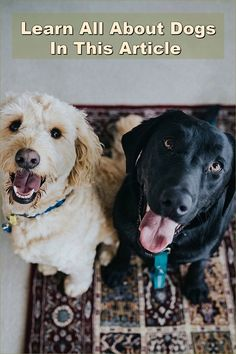 Owning a dog is a serious matter. You have to be sure that you have a happy and a healthy dog. Doing your research will help you reach this balance, so be sure to properly read the following information. Pet Dogs, Dogs And Puppies, Pets, Dog Care Tips, Pet Care, Dog Training Tips, Dog Lovers, Cute Animals, Healthy