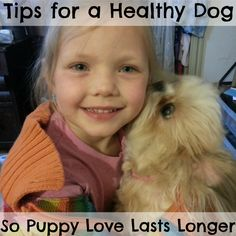Tips for Keeping Your Dog Healthy- The Spring Mount 6 Pack